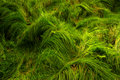 Forest grass Stock Photo