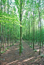 Forest green 图库摄影
