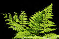 Forest Green Fern Royalty Free Stock Images