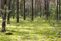 Forest with green moss background in a sunny day Stock Images