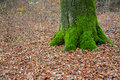 Forest and green mossy tree trunk ground a on the right Royalty Free Stock Photos