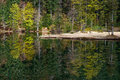 Forest of green trees reflecting in calm lake Royalty Free Stock Photo