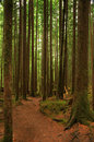 Forest hiking trail Stock Image