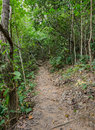 Forest hiking trail through the thailand Royalty Free Stock Photography