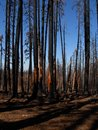 Forest Hill Forest Fire Royalty Free Stock Photography