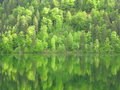 Forest hillside in lake reflection a situated fir tree with its blurred on the calm surface of the Stock Photo