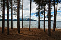 Forest beside lake Borovoe, Kazakhstan Royalty Free Stock Photos