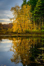 Forest lake in fall autumn at the Stock Photo
