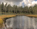 Forest lake with pines in hdr wild landscape marshy summer wilderness scene sweden Stock Photo