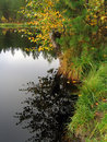 Forest lake shoreline in autumn Royalty Free Stock Photo