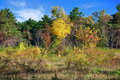 Forest landscape at golden autumn Royalty Free Stock Photo