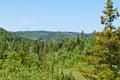 Forest landscape. Newfoundland Royalty Free Stock Photo