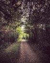 A beautiful and bucolic path in the middle of a manicured forest