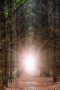 Forest light burst Royalty Free Stock Photos