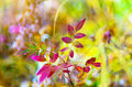 Forest light show bokeh with yellow and red leaves of the plants in a natural sunshine dof Stock Image