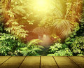 Forest light sunlight in tropical jungle Royalty Free Stock Images
