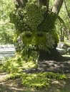 Forest man plants grown to look like a tree spirit of gardiann Stock Photography