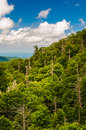 Forest with many dead trees seen in shenandoah national park from skyline drive virginia Stock Image