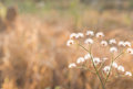 Forest meadow with wild grass,Macro image with small depth of field,Blur background Royalty Free Stock Photo