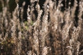 Forest meadow with wild grasses, image with small depth of field Royalty Free Stock Photo