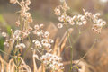 Forest meadow with wild grasses,Macro image with small depth of Royalty Free Stock Photo