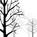 Forest monotone tree and in Royalty Free Stock Photo