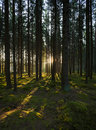 The forest in the mornig Royalty Free Stock Photos