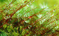 Forest moss Royalty Free Stock Images