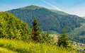 Forest on a mountain hillside in rural area Royalty Free Stock Photo