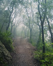 Forest in mountains on foggy day Royalty Free Stock Photo