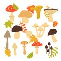Forest mushroom collection. Set of items isolated on white background. Vector illustration