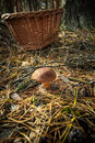 Forest mushroom in front of basket Royalty Free Stock Image