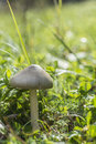 Forest Mushroom In The Grass. ...