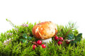 Forest mushroom in moss heather and cranberries Stock Photo