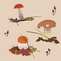 Forest mushrooms-eatable Royalty Free Stock Photo