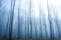 Forest nature fog in dark Royalty Free Stock Photo