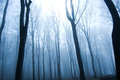 Forest nature fog in dark Stock Photo