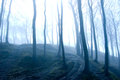 Forest nature fog in dark Royalty Free Stock Photos