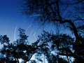 Forest night sky star trails a long exposure photo of the with showing movements of stars during a long exposure shot and tree Stock Image