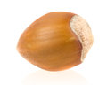 Forest nut on white background Stock Photo