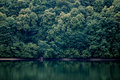 Forest over lake shore thick Stock Images