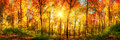 Forest panorama in autumn Royalty Free Stock Photo