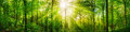 Forest panorama with warm sunrays Royalty Free Stock Photo