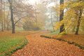 Forest park and dry rivulet bed with fallen leaves in misty autu brown autumn Stock Image