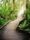 Stock Images Forest path