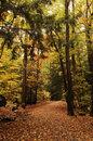 Forest path Royalty Free Stock Photography