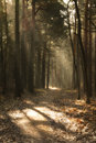 Forest a path in a Royalty Free Stock Images