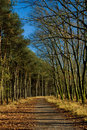 Forest path in autumn Royalty Free Stock Photos