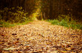 Forest path at autumn season. Royalty Free Stock Photo