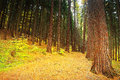 Forest path in autumnal bezrucovo udoli valley czech republic Royalty Free Stock Photo